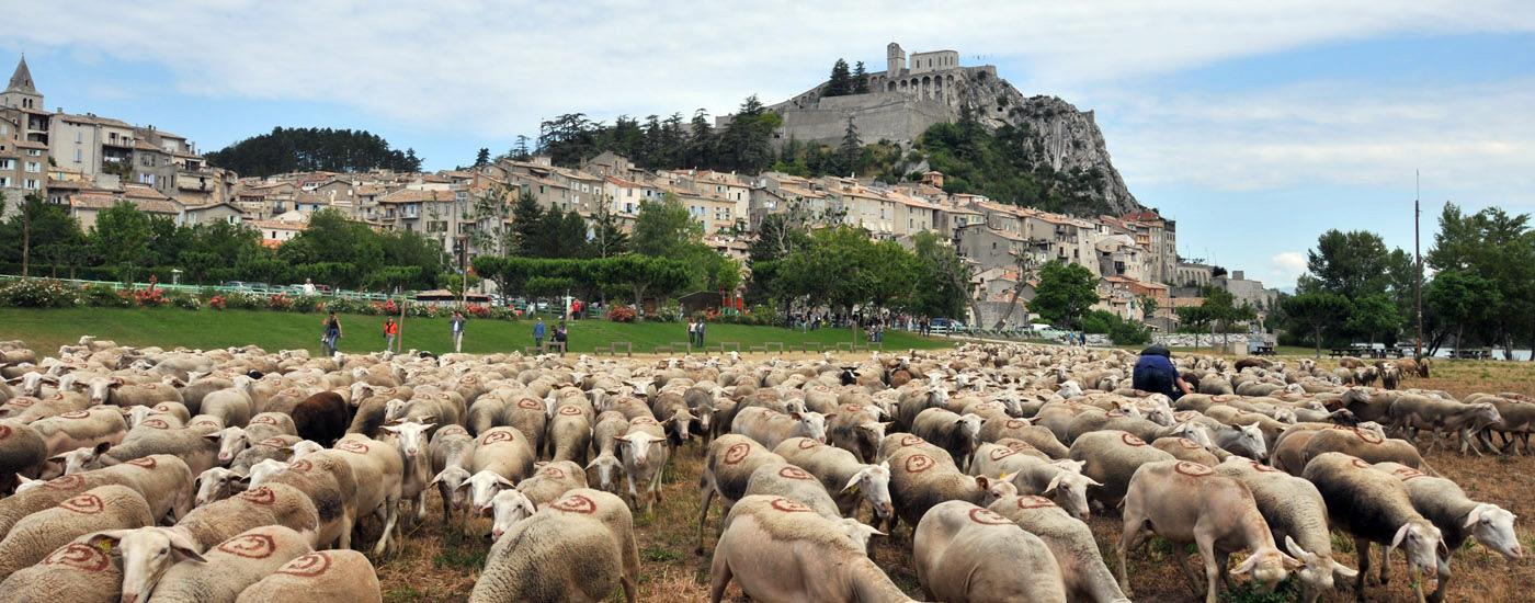 activités culturelles à sisteron,la fête de l'agneau